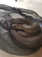 Snakey...