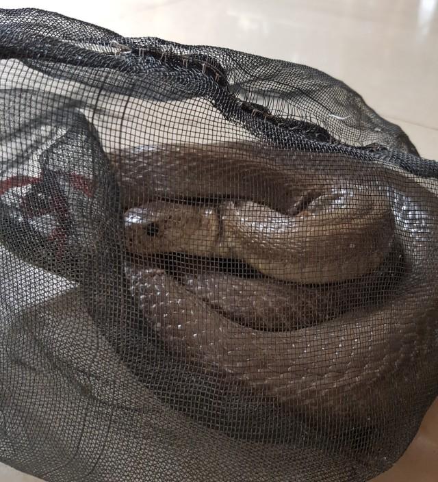 hcmc_snake